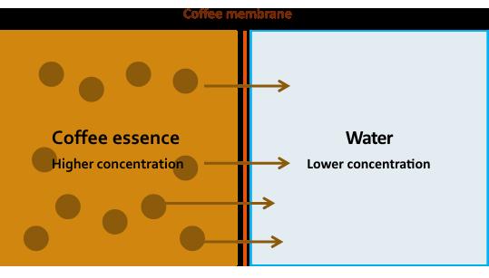 Coffee membrane